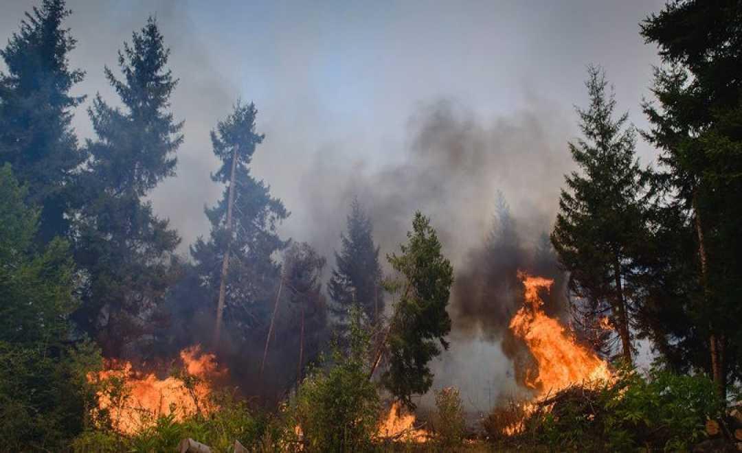 აბასთუმნის ტყეში ხანძარია - ცეცხლი წიწვოვან ხეებს უკიდია.